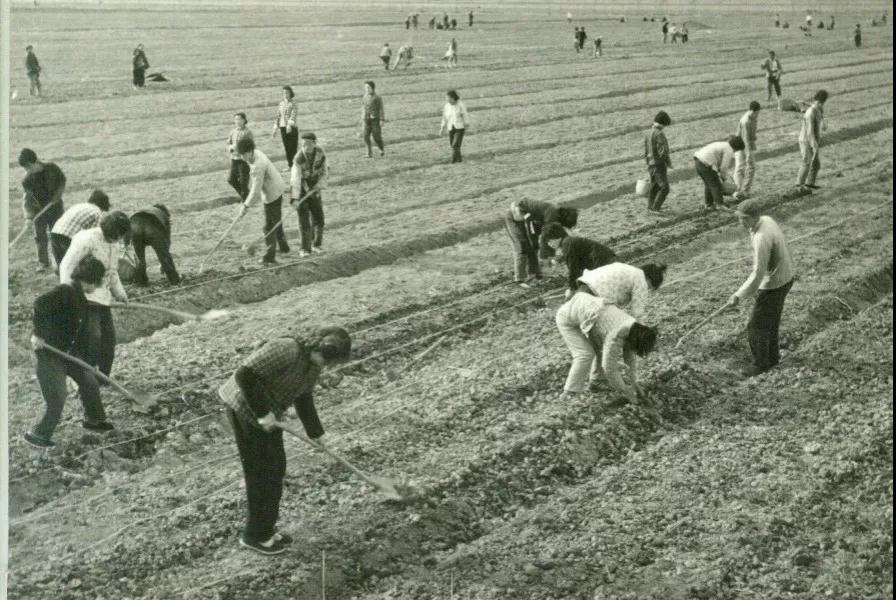70年代农业生产